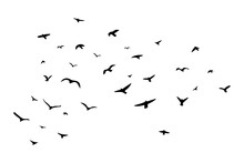 A Flock Of Flying Birds. Vecto...