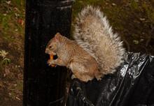 Squirrel On The Bin