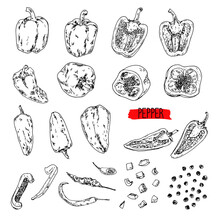Hand Drawn Sketch Style Pepper Set. Bell Pepper, Chilli, Peas, Cayenne Pepper, Chopped Pepper. Vector Illustration.