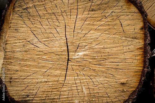 Obraz Belka, pień ściętego drzewa widziana od przodu, widoczne słoje - fototapety do salonu