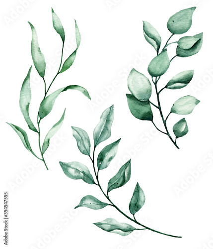 Fototapety, obrazy: Leaves watercolor, hand painting floral botanical illustration. Green leaf, plant, foliage, branch isolated on white background.