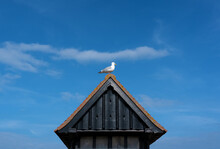 Seagull Perched On Old Wooden ...