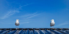 Two Seagulls Looking At Each O...