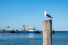 Seagull Standing On A Pole At ...