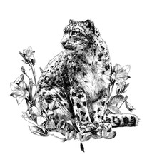 Snow Leopard Animal Sitting At...