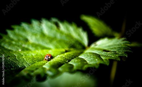 Marienkäfer Love bug Canvas