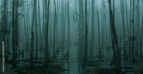 Photo Panoramic view of empty, misty swamp in the moody forest with copy space
