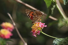 Types Of Beautiful Butterflies On Plants And Flowers Drink Nectar