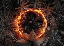 3d Rendering Of Circle Shape In Fire Over Tropical Plants. Flat Lay Of Minimal Nature Style Concept