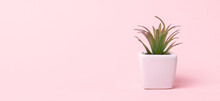 Aloe Succulent On A Pink Backg...
