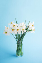 Bouquet Of White Flowers Daffodils In Vase On Blue Background, Copy Space