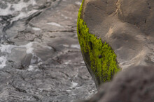 Rocks With Moss On The Seashore