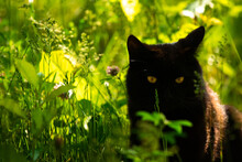 Black Cat In Green Grass Hiding And Resting