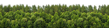 Lush Green Forest On The Horiz...