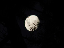 Night View Of Pine Tree Tops U...