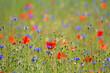 canvas print picture - Wildblumenwiese mit Klatschmohn und Kornblumen