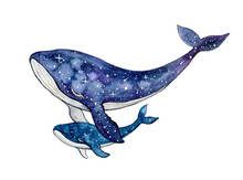 Watercolor Whale With Baby On The White Background