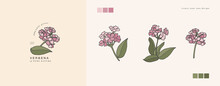 Vector Illustration Verbena Branch - Vintage Engraved Style. Logo Composition In Retro Botanical Style.