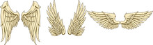 Golden Wings Vector Collection...