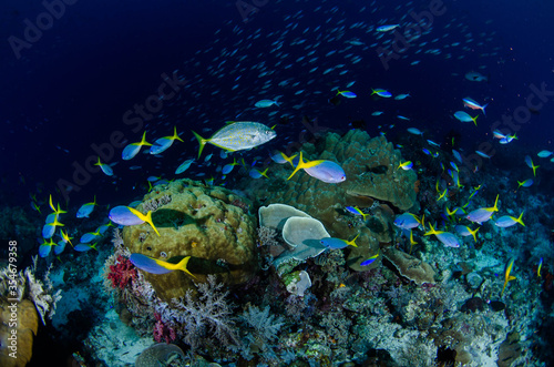 coral reef and fish #354679358
