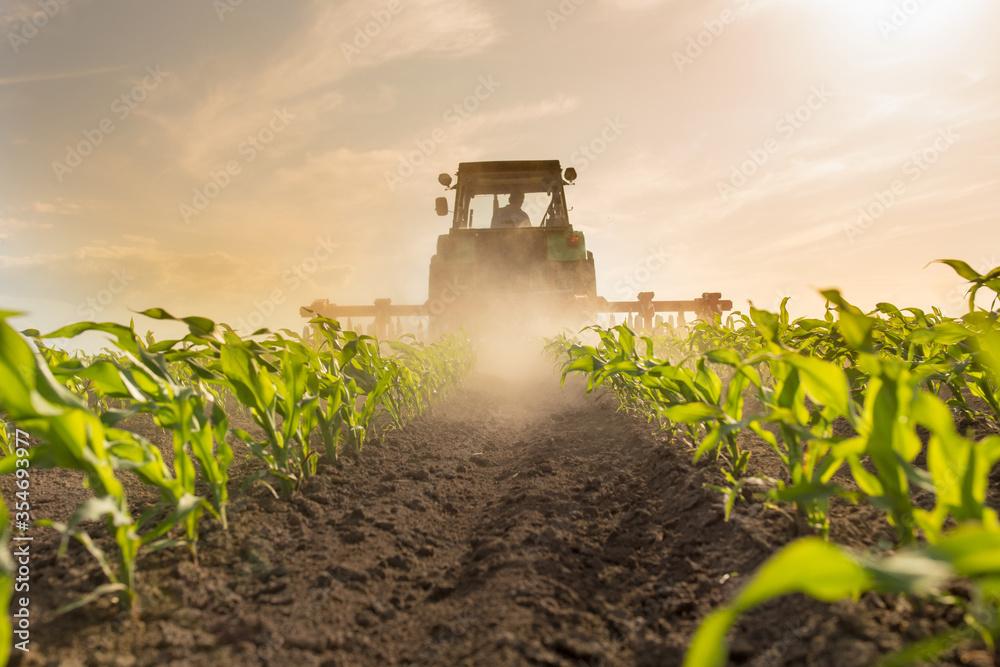 Fototapeta Tractor harrowing corn field