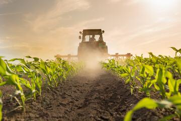 Tractor harrowing corn field