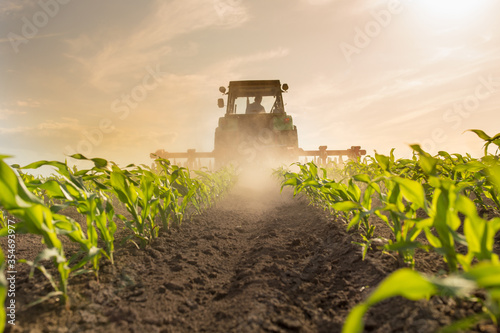 Fototapeta Tractor harrowing corn field obraz