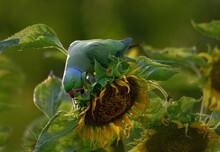 Rose Ringed Parakeet Bird On A...