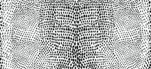 Snake Skin Seamless Pattern. V...