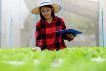 Organic Vegetable Garden Salad...