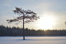 A Lone Tree Stands Out In The Middle Of A Frozen Lake Against The Sun, Landscape