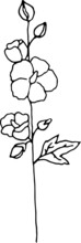 Vector Hollyhock Flowers. Hand Drawn Doodle Style Illustration. Black Outlines Isolated On White Background. Image For Coloring Book Design, Seasonal Cards Decoration And Printed Materials.