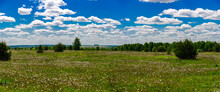 A Field Covered With Dandelions, In The Foreground An Overgrowth And Free-standing Bushes And Trees, In The Background A Yellow Field And A Long Forest. Panorama