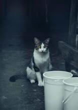 Vertical Shot Of A Cute Cat Si...