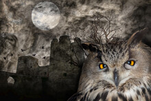Owl On Background With Bare Tr...