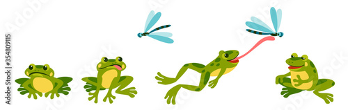 Canvas Print funny frog is resting sad hungry, sees a dragonfly, jumps and shoots its tongue, eats it and sits contentedly and full
