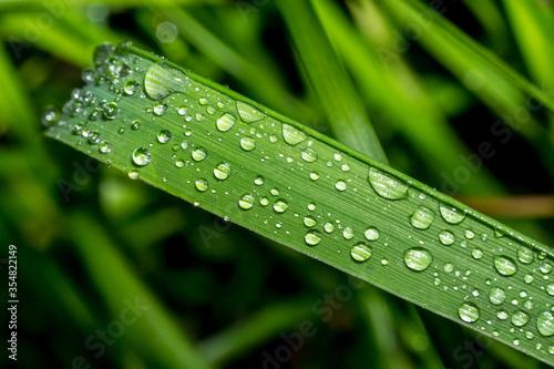 Kropla wody na liściu