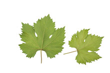 Reen Grape Leaves Isolated On ...