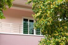 Anan, Tembusu Flower (Fagraea Fragrans Roxb.) Over Blured House Background,it's  Good Smell Flower