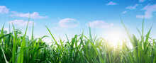 Spring And Grass Background. Spring Summer Background With Fresh Green Grass And Blue Sky In Nature. Panoramic View, Copy Space.