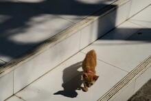 Petit Chat Roux Sur Des Marche...
