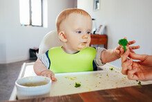 Messy Baby Girl Sitting On Highchair And Taking Finger Food. Little Child Eating Soft Cooked Vegetables. Led Weaning And Self-feeding Concept