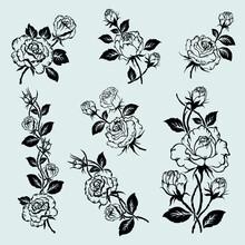 Set Of Rose Motif