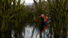 Mandarin Duck Among The Reeds,...