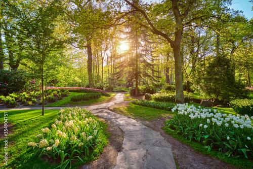 Keukenhof flower garden with blooming tulip flowerbed - one of the world's largest flower gardens on sunset Fototapete