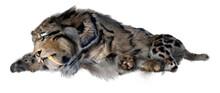 3D Rendering Sabertooth Tiger ...