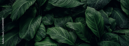 abstract green leaf texture, nature background, tropical leaf  #354944901