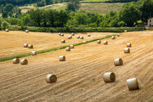 Bologna Hills Hay Harvest For Agri-food Use