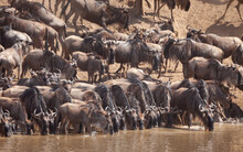 The Great Annual Migration In Kenya