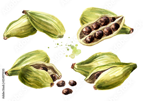 Fototapeta Cardamon pods and seeds set, Super food and indian aroma spice. Hand drawn watercolor illustration isolated on white background obraz